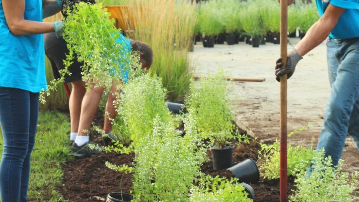Træpleje: Klar havearbejdet med gode haveredskaber